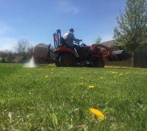 Dandelion Spraying