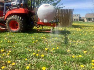 Get rid of dandelions